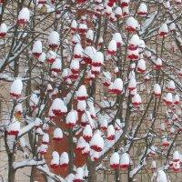 Первый снег :: Наталья Гришина