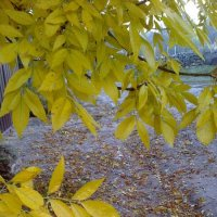 Осень :: Людмила Глазкова
