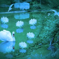 Лебедь :: Наталья-13 Аветова
