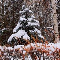 Хоть не морозною зимой, но в тёплой шубке меховой :: Татьяна Ломтева