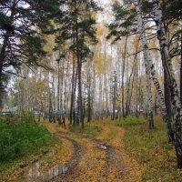 В лесу осень . :: Мила Бовкун