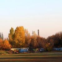 Деревья на закоте :: Сергей Касимов