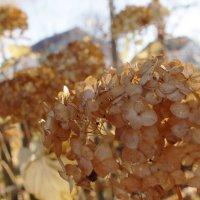 Осень в цветах :: Екатерина Кимстач