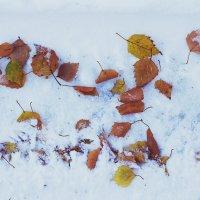 листья на снегу :: Tasha