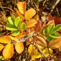 Встреча лета с осенью :: Лидия (naum.lidiya)