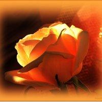 Светящееся чудо :: Лидия (naum.lidiya)