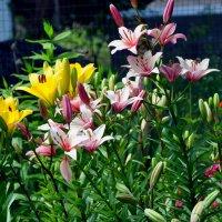 Цветы :: Аня Лакина