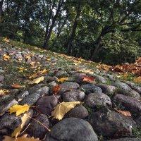 Шорох листьев под ногами :: Лариса Шамбраева