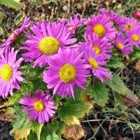 Осенние цветы :: Александр Резуненко