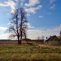 высокое дерево :: Валентина. .