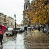 дождливый Питер :: Наталья Ерёменко