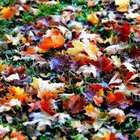 Les Feuilles Mortes (Autumn Leaves) :: Андрей Вестмит