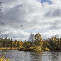 листья жёлтые летят :: Владимир Иванов