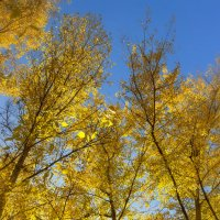 Осенняя листва :: Denis Aksenov