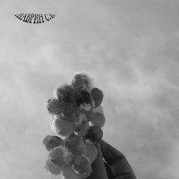 Снежный виноград :: Сергей Шаврин