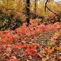 Опавшие листья :: Владимир Болдырев