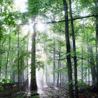 лес :: Dorosia safronova