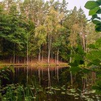 лесное озеро :: Злата Красовская