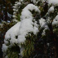 Первый снег :: July Johnes