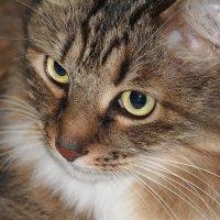 Эти глаза на против. :: Маргарита ( Марта ) Дрожжина