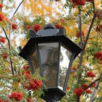 Да просто красиво) (если приглядеться к фонарю, видно неопознанное существо))) :: Олеся Топоркова