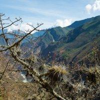 Цветы у тропы. :: Аркадий Шведов