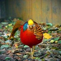 Праздничная курица) :: Семен Кактус