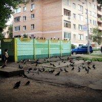 Дети любят голубей... :: Ольга Кривых