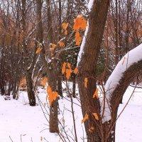 И знает лист, что поутру уронит его на снег зимой плененный клен :: Татьяна Ломтева