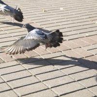 Рвём отсюда крылья, братва!!! :: Алеся Пушнякова