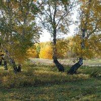 Осень в лесу. :: Наталья А