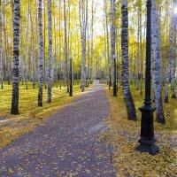 Золотая осень :: Михаил Рехметов