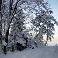 Снег на ветках :: Сергей