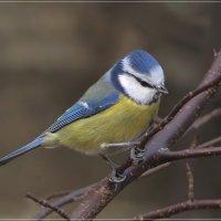 Яркая птичка... :: Андрей Медведев
