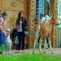 жеребенок в Болгар :: Ильназ Фархутдинов