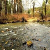 Весенние воды горной речки :: galina tihonova