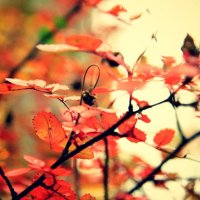 осень и ко мне пришла :: Янина Пименова