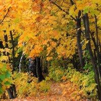Тропинка в Осень. :: Николай Кондаков