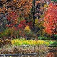 Осенью в Японском садике.. :: Николай Кондаков