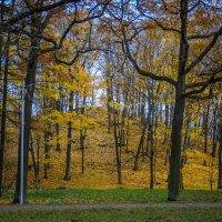 Золотая гора :: Денис Смирнов
