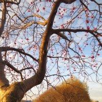 приветливая осень :: Елена