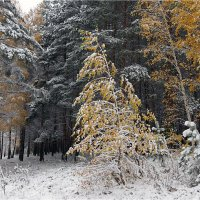 Зима&осень :: Николай Белавин