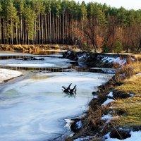Крепчает первый лёд реки... :: Лесо-Вед (Баранов)