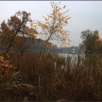 Грусть осени :: Надежда Лаврова