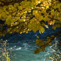 цвет осеннего Баксана :: Мариям Хаджиева