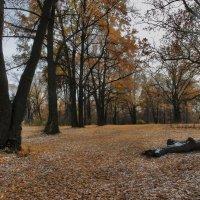 Осень :: sergej-smv