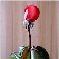 Портрет осенней розы... :: Тамара (st.tamara)