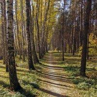 осенний лес :: Геннадий Свистов