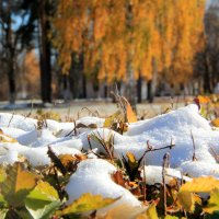 Первый снег :: Татьяна Нижаде