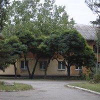 Дорога домой :: Надюшка Михальчишина